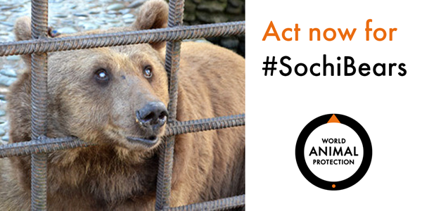 Please SIGN & SHARE the petition to free two defenceless bears >http://t.co/tVxJhAFQHh  #SochiBears #WorldWildlifeDay http://t.co/kQVOTeRp48