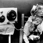 Science has developed music for cats http://t.co/s2ePWiXBCs http://t.co/ppTmX8Mrie