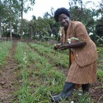 She quit lecture room to grow flowers: http://t.co/IX1ZqjuwfR #SeedsOfGold http://t.co/Q7Dxq9dzHr