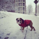 Area pets give D.C. snow day two paws up! http://t.co/hiu7vTLe3D http://t.co/LK3POPxpaP