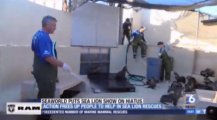 SeaWorld puts sea lion/otter show on hiatus to help with rescues http://t.co/ikKy4Sw5Em @JohnCarrollSD6 http://t.co/CtCUu0fQZU