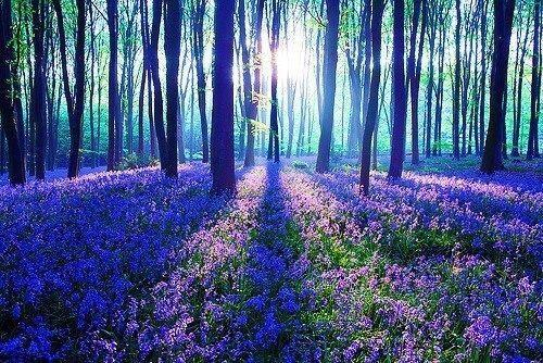 Purple Haze, The Black Forest, Germany. http://t.co/809FVwiiQq