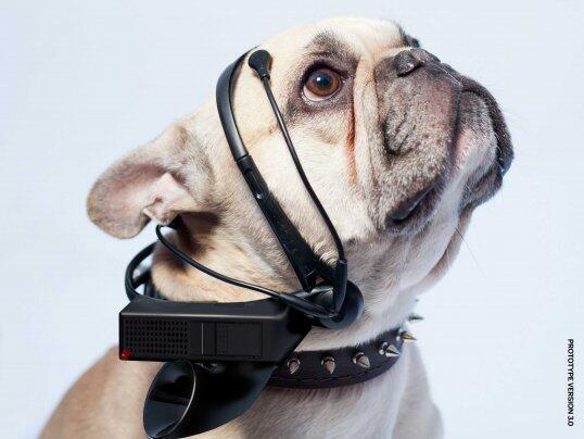 คนรักสุนัขโปรดทราบ! ต่อไปนี้ความฝันของคุณจะเป็นจริง เมื่อมีคนกำลังประดิษฐ์ เครื่องแปลภาษาหมา!! http://t.co/wZcWH1ivxD http://t.co/Jv6q31diIL