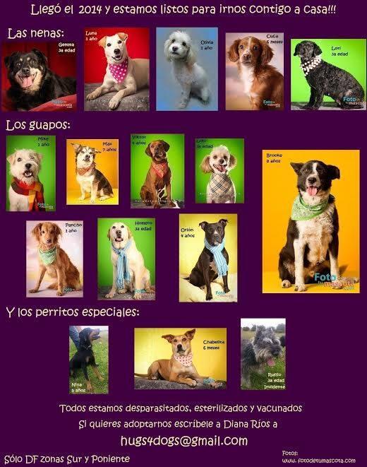 Estos perritos están listos para ser adoptados @en_ladelvalle http://t.co/Qmns21PC8C