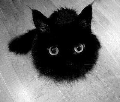 How adorable is this fluffball? http://t.co/G7lOkLusGv