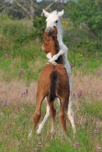 Need a hug? #horses #horselove http://t.co/Ko6G9hRMnj