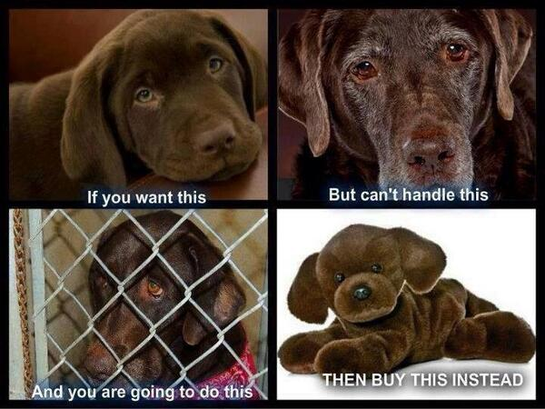 Yes!! RT @Sazzy2010: So true ❤️this xx @DogsTrust @DOGliving @peteswildlife @TheDogDaily @iLoveDogsInc @BDCH... http://t.co/na63294zCK