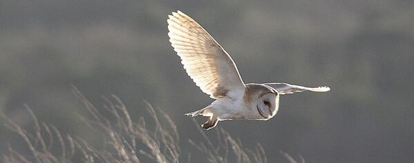 Many thanks to Kent photographer Les Foster for this beautiful Barn Owl photo. More: http://t.co/pXlOmjpRid http://t.co/nb9gxAa1yy