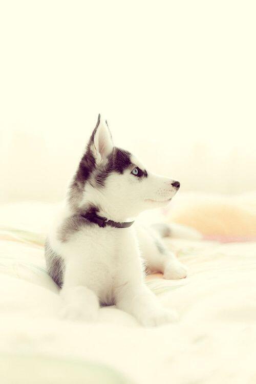 So cute http://t.co/n4Zc87sowU
