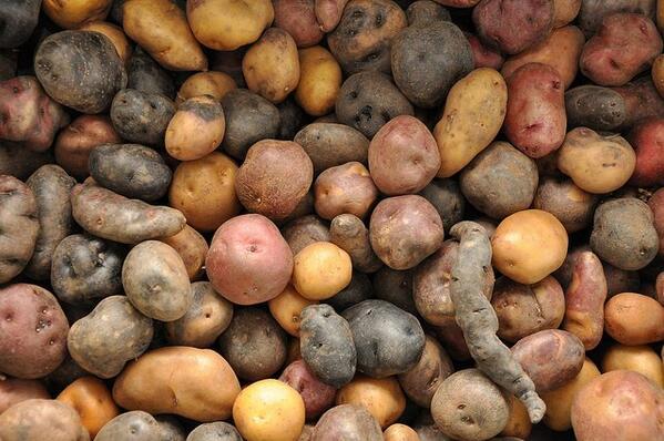 ¿Sabes que existen más de 4.000 variedades de patata? #gastronomia http://t.co/Duoa71U0Gq