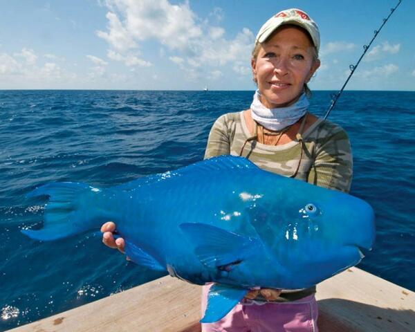 Can you believe this fish is real? It's called Eastern Blue Groper http://t.co/0egiInSedG