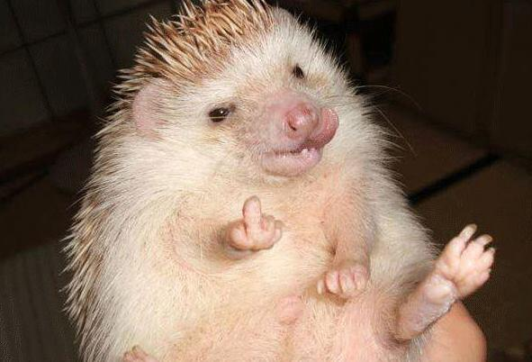 woah ............ hedgehog with a prickly attitude !!! http://t.co/XMZZRMoG9F http://t.co/qvPiNXDH5z ☼