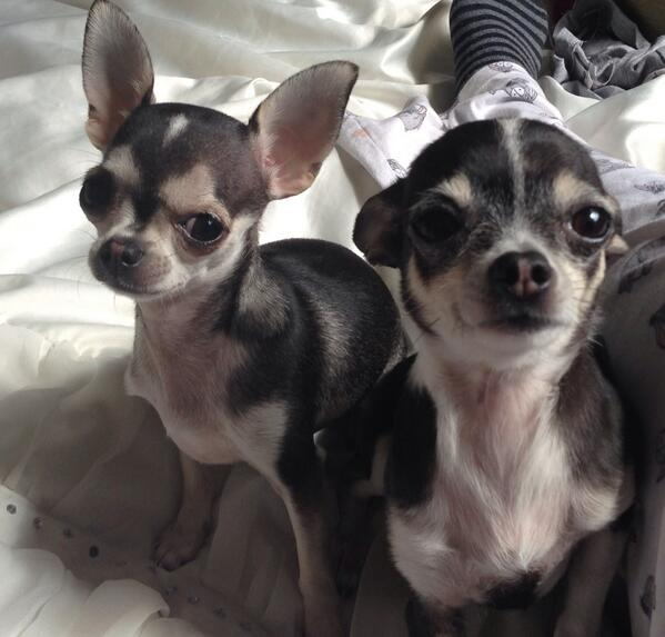 Lori Buckby (@OnlyLittleLori): Healthy REWARD waiting for anyone who can return my dogs to me unharmed!!!!!! Call 07759249729  RT RT RT http://t.co/RelgXV19Tt