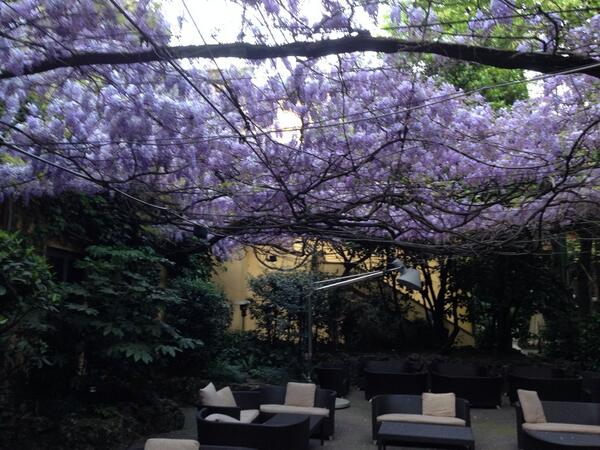 The most beautiful--and fragrant--ceiling in Milan: wisteria in the courtyard of the hotel Diana Majestic. http://t.co/G5kux3KHp2