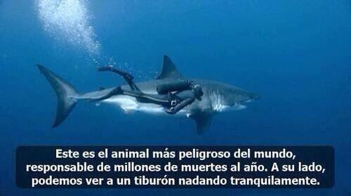 Este es el animal más peligroso del mundo... http://t.co/jklm0cUppi