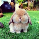 RT @OfficialSanta: Who's ready for the EASTER BUNNY!!!  http://t.co/TMwZgaF2id
