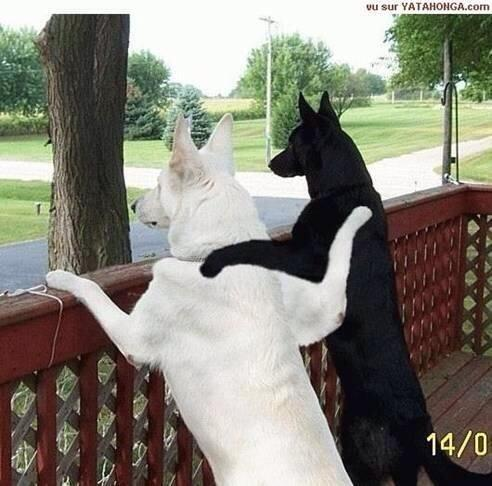 More evidence that dogs are better than people, and see no racism. #clivenbundyisarascistdouche http://t.co/ivDlKaPiR8