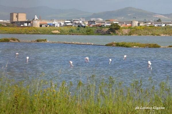 Flamingos in the Saline of Trapani (salt mines) photo by @LorenzoGigante #sicily #Sicilia http://t.co/XOkAGuMFkp