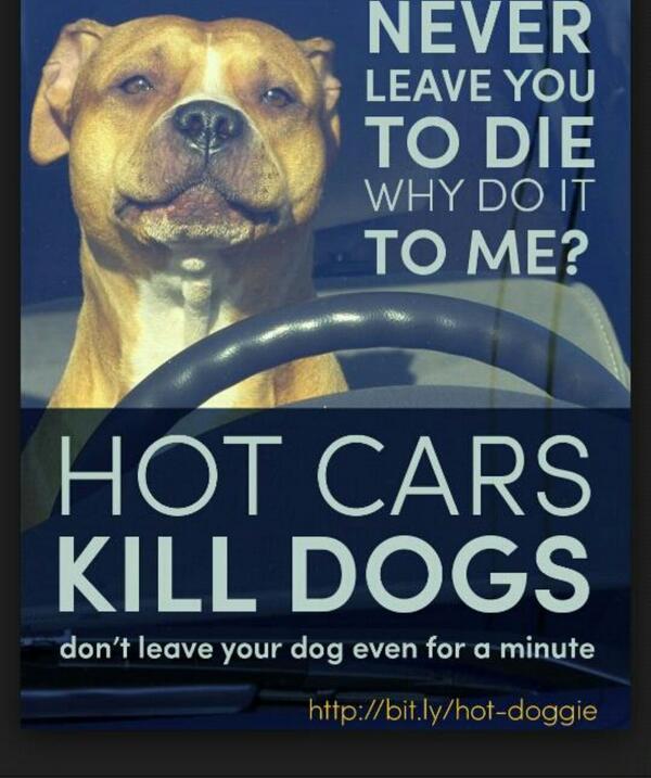 """@beaumadisonpc: @Barbi_Twins Glad boxer #puppy is ok! http://t.co/KeOYlj3NvI"" #dogs #ALERT"