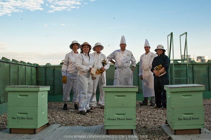 What's Plan #Bee? Check out these #rooftop chefs, they understand how to do it! @SonnyBeez @Bijenlint @GreenpeaceNL http://t.co/WZ5hVFyDlt