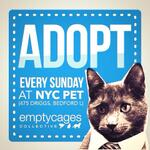 RT @Pets4VetsNYCLI: #NYC KITTIES! @AmsterDogRescue: ADOPTIONS EVERY SUNDAY! @emptycages in #Williamsburg #Brooklyn 12:30-5:30 #cats http://t.co/ar29sgFYwH