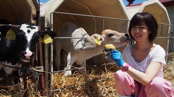 きゃんちさんと酪農体験ジャガ!!ってボクはあわや、きゃんちさんの手によって子牛ちゃんの昼ご飯にされるところだったジャガ。。。ひぃ http://t.co/kEfE4uaUvK