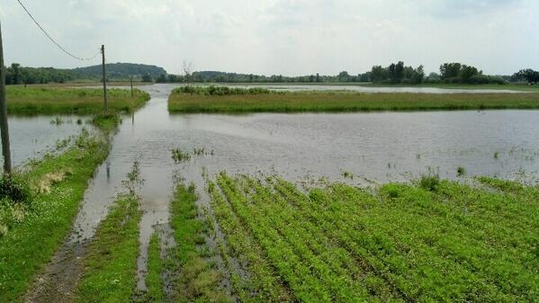 "Dear @EPA  This is a flooded field. It is not a ""navigable waterway"" #ditchtherule http://t.co/BlzyWnPsHD"