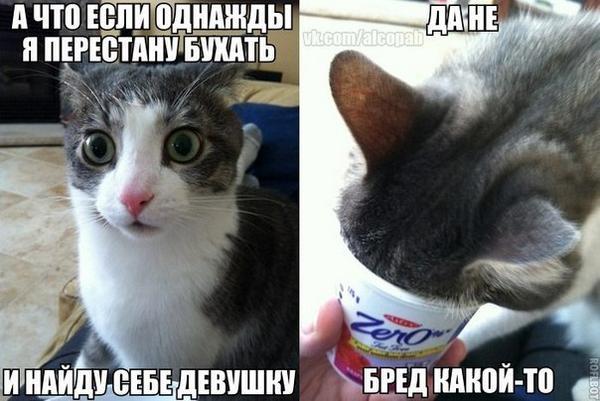 Кот запер москвичку на балконе и ушел спать