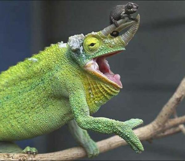 RT @CyG_zoom: #zooooom on #animals http://t.co/15zCQ7X0rV