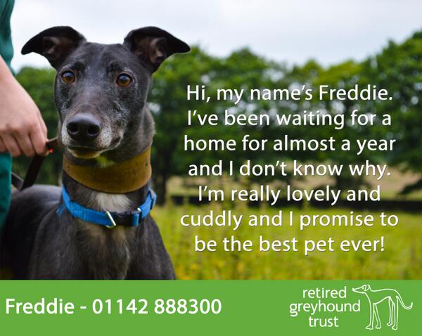 Please retweet Freddie's appeal - all he wants is a home to call his own! http://t.co/M1QLV3G5bw