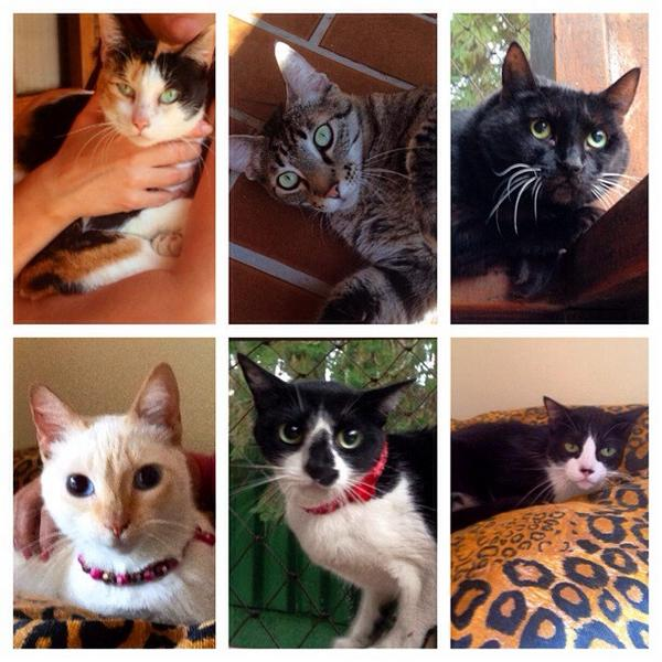 Lindos gatinhos, para adoção conosco, em São Paulo. http://t.co/0cqvIfVMCo