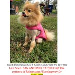 Jelly is missing in #sanantonio. #lost #missing #lostdog #helpmehome http://t.co/qDk9zbBDyd