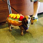 Sophie, the Twilio office dog, celebrates National Hot Dog Day - #NationalHotDogDay http://t.co/xV3ONlDA2s