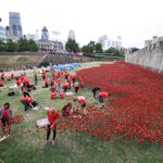 You have to see this. Outside Tower of London, volunteers plant 800,000 poppies for dead of WW1, shaped like the sea http://t.co/Hrp666pgDg