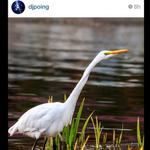 Great shot of wildlife at #EchoParkLake #LosAngeles via @djpoing http://t.co/aUJaKBHBiG http://t.co/xx7FoZoDna