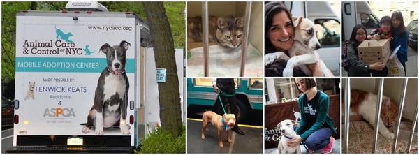This Sat we'll be hosting NYACC's Mobile Adoption Center at Hester.  Come say hello to our furry friends! @NYCACC http://t.co/Y7vmSo3my4