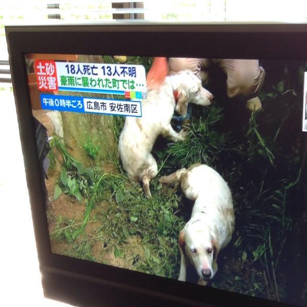 広島の土砂崩れ現場から生き埋めになっていた犬が二匹無事に助けられた。 http://t.co/THOFExoAPo