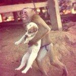 RT @sabiastuque_: Un mono protegiendo a un perro de las inundaciones en Indonesia. http://t.co/zSRWQSDb9M