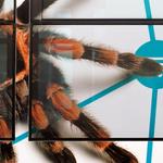 Arachnophobiker in #Würzburg aufgepasst! In welchem Netz wird diese Spinne wohl bald ihr Unwesen treiben … ? http://t.co/HJm7MCgWh4