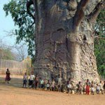 RT @ThatsEarth: 2000 year old tree in South Africa known as tree of life http://t.co/LdLvwySlKB
