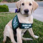 RT @Wayne_Oddy: @DavoHauser @NRL @guidedogs @RLW_Mole @LeagueFreak New referee in training http://t.co/cdwWeFmABj