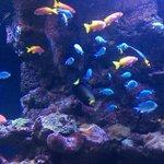 I love aquariums! ???????????? #fisharefriends #downtown #dallas #aquarium #Dallas http://t.co/QoUpNGtWVk