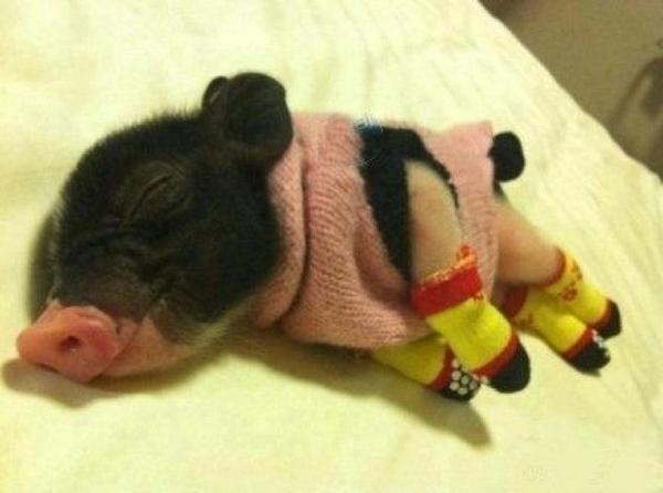 Pignorance is bliss. http://t.co/2dKiStBHmO