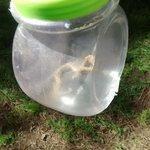 agarramos una yarará con los pibes http://t.co/mSRjejDyZ8