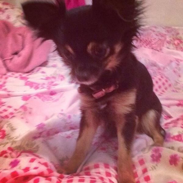 Chihuahua taken in vehicle theft #Otley Have you seen her or the Nissan Juke she was taken in? http://t.co/ibKIq3C54X http://t.co/0aAu3KRlm8