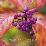 And @chrisbeardshaw picks his favourite autumn-fruiting plants in @TEGmagazine Oct issue - berrytastic http://t.co/ZCDGlYRRAZ