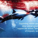 @JapanToday Via @mtncoffeeco: #Taiji DUMPED MY BABIES AT SEA Then Killed me #Tweet4Dolphins http://t.co/Kp976F1KAN