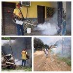 RT @LuisLopezPSUV: #ContraElDengueYChikungunya | Décima Jornada Intensa de abordaje en todo Ocumare de la Costa de Oro. @TareckPSUV http://t.co/VNYh3i7Cdp