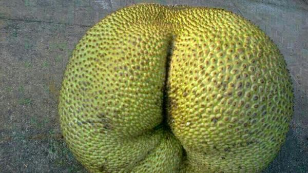 Chakka kundi kandittundo? I mean jackfruit ass. This. http://t.co/t2BcYONix4