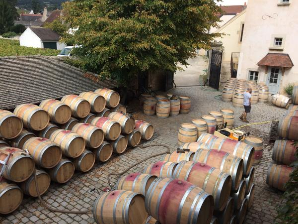 Jeremy Seysses (@JeremySeysses): A normal size crop at last! Lots of barrels to prepare. Some passersby probably think the cellar is full… http://t.co/d772HjxYSx